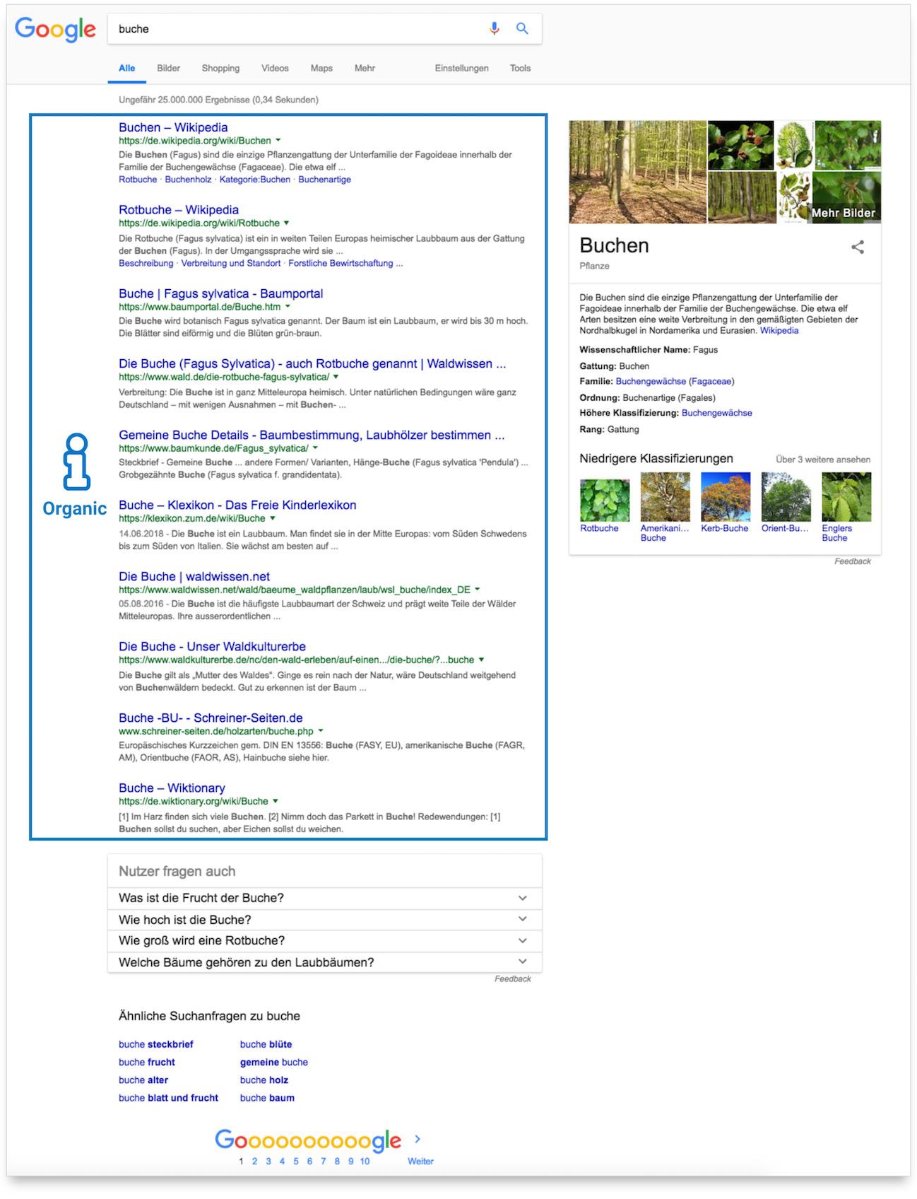"""Zeigt die Google-Suchergebnisseite für das Keyword """"buche"""" an. Es werden insgesamt 10 organische Ergebnisse angezeigt."""